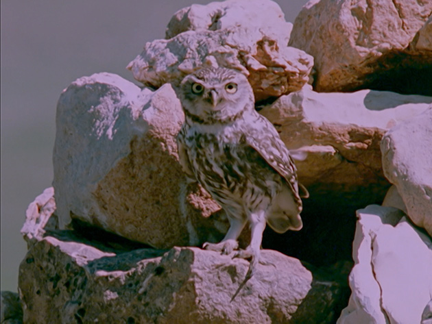 The Owl's Legacy: Philosophy, or the Triumph of the Owl - image